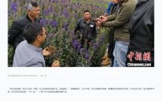 """中国新闻社:四川凉山产业扶贫:前所乡有了""""前所未有""""的变化"""